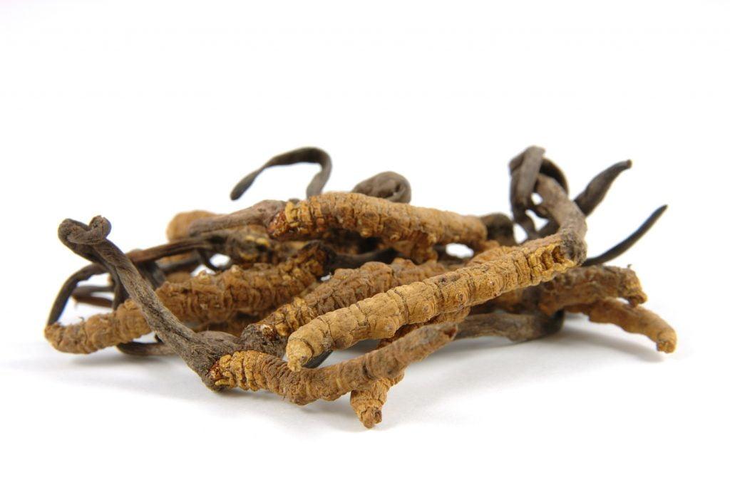 Cordyceps sinensis (Raupenpilz)