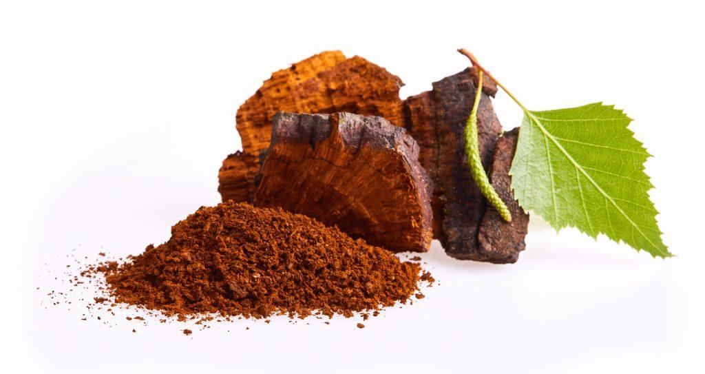 Chaga - Tschaga Pilz und Pulver